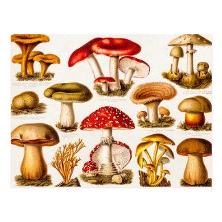 Vintage 1800s Mushroom Variety Template Postcard