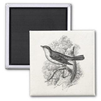 Vintage 1800s Nightingale Bird Illustration Birds 2 Inch Square Magnet