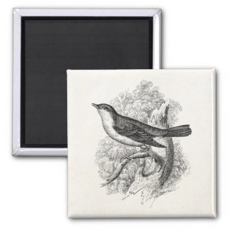 Vintage 1800s Nightingale Bird Illustration Birds Refrigerator Magnets
