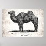 Vintage 1800s Old Camel Illustration Retro Camels Print