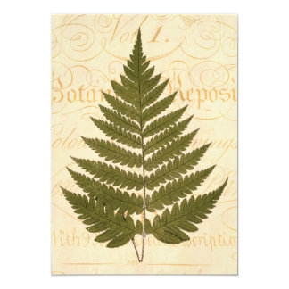 Vintage 1800s Olive Green Fern Leaf Illustration Card