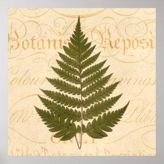 Vintage 1800s Olive Green Fern Leaf Illustration Poster
