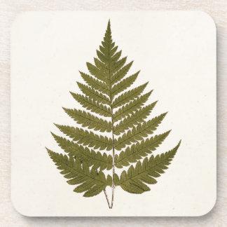Vintage 1800s Olive Green Fern Leaf Template Coaster