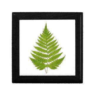 Vintage 1800s Olive Green Fern Leaf Template Keepsake Box