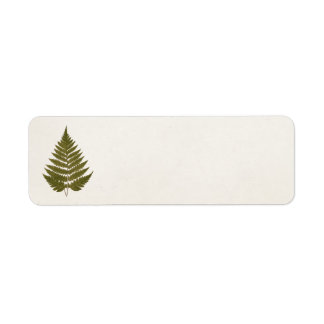 Vintage 1800s Olive Green Fern Leaf Template Label
