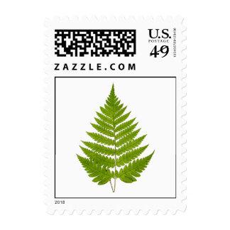 Vintage 1800s Olive Green Fern Leaf Template Postage Stamps