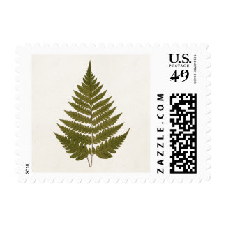 Vintage 1800s Olive Green Fern Leaf Template Stamp