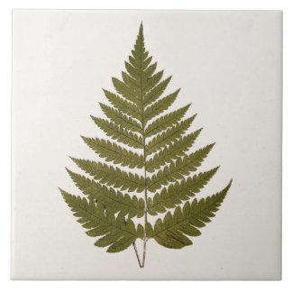 Vintage 1800s Olive Green Fern Leaf Template Tile