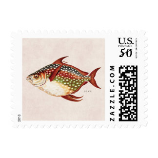 Vintage 1800s Opah Tropical Sporting Fish Drawing Postage