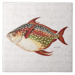 Vintage 1800s Opah Tropical Sporting Fish Drawing Large Square Tile