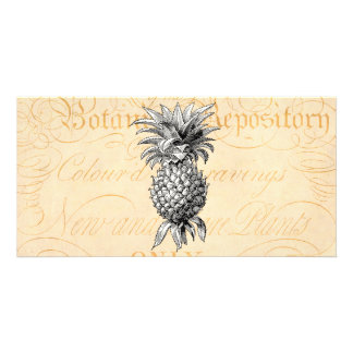 Vintage 1800s Pineapple Illustration Botany Card