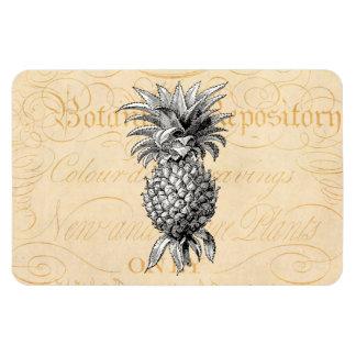 Vintage 1800s Pineapple Illustration Botany Magnet