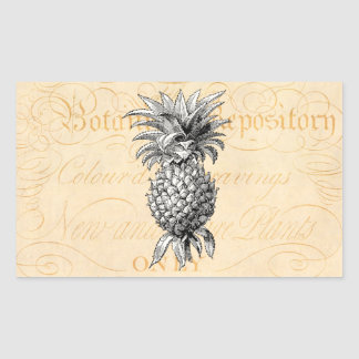Vintage 1800s Pineapple Illustration Botany Rectangular Sticker