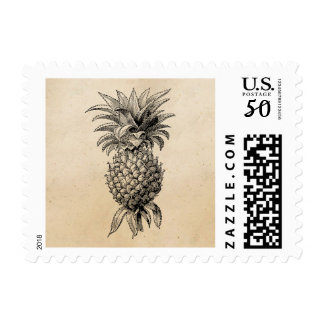 Vintage 1800s Pineapple Illustration Pineapples Postage
