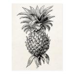 Vintage 1800s Pineapple Illustration Pineapples Postcards