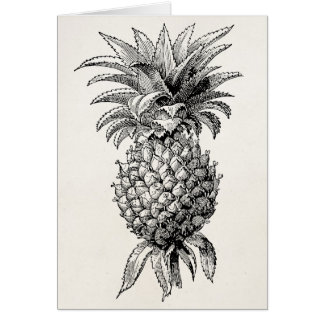Vintage 1800s Pineapple Illustration Pineapples Stationery Note Card
