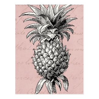 Vintage 1800s Pineapple Illustration Pink Postcard