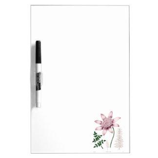 Vintage 1800s Pink Dahlia Flower Dahlias Floral Dry-Erase Whiteboard