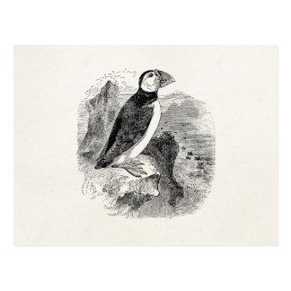 Vintage 1800s Puffin Bird - Puffins Birds Template Postcard