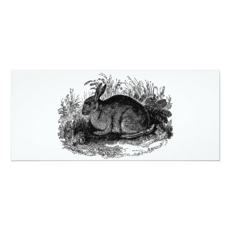 Vintage 1800s Rabbit Retro Bunny Template Rabbits