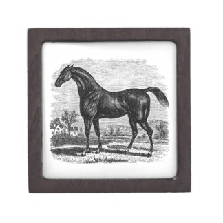 Vintage 1800s Race Horse Retro Thoroughbred Horses Gift Box