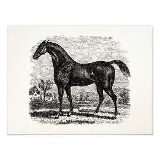 Vintage 1800s Race Horse Retro Thoroughbred Horses Photo Print