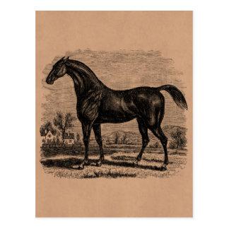 Vintage 1800s Race Horse Retro Thoroughbred Horses Postcard