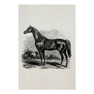 Vintage 1800s Race Horse Retro Thoroughbred Horses Poster