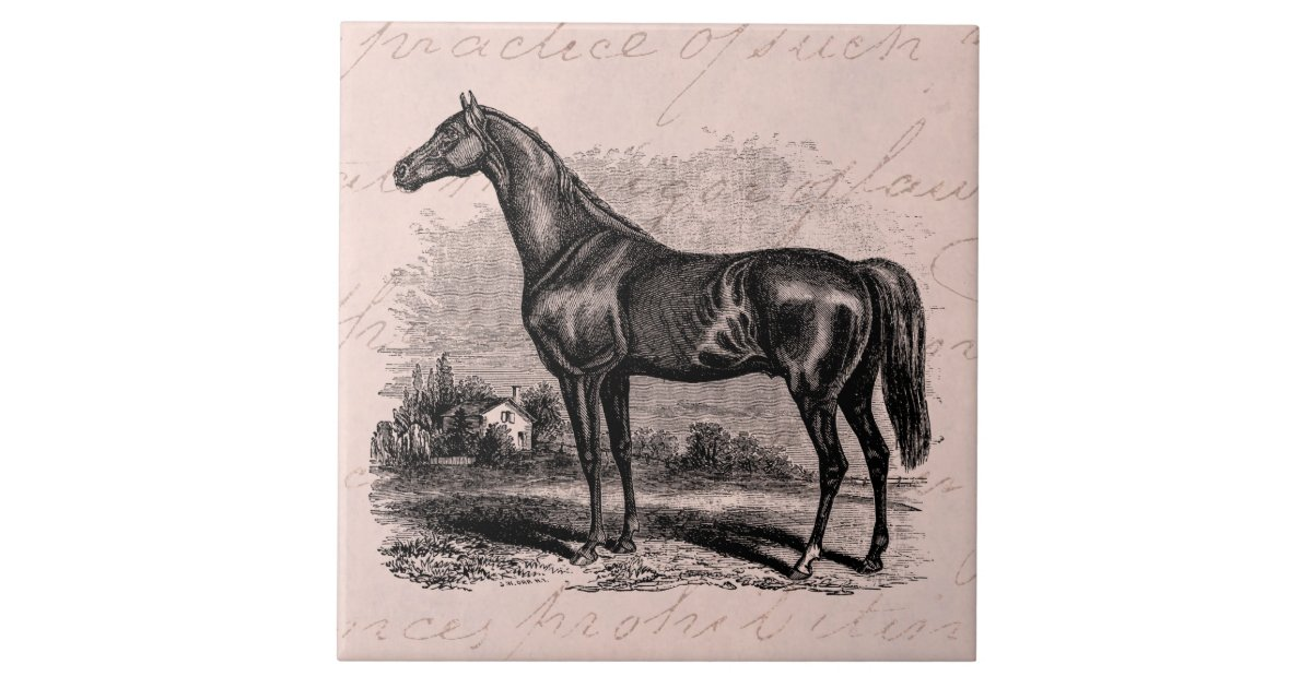 Vintage 1800s Race Horse Retro Thoroughbred Horses Tile