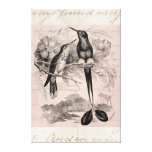Vintage 1800s Racket-Tail Hummingbird Racquet Tail Stretched Canvas Print