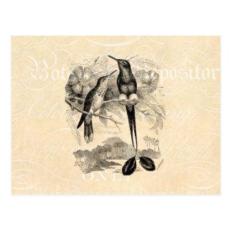 Vintage 1800s Racket-Tail Hummingbird Racquet Tail Post Card
