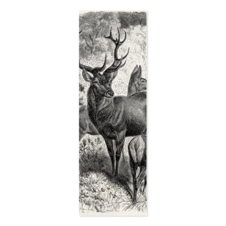 Vintage 1800s Red Deer Illustration Stag Doe Fawn Double-Sided Mini Business Cards (Pack Of 20)