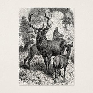 Vintage 1800s Red Deer Illustration Stag Doe Fawn Business Card