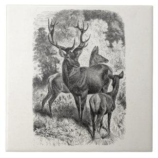 Vintage 1800s Red Deer Illustration Stag Doe Fawn Ceramic Tile