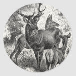 Vintage 1800s Red Deer Illustration Stag Doe Fawn Classic Round Sticker