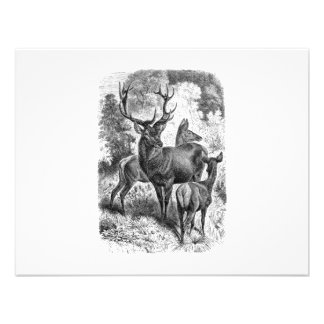 Vintage 1800s Red Deer Illustration Stag Doe Fawn Personalized Invites