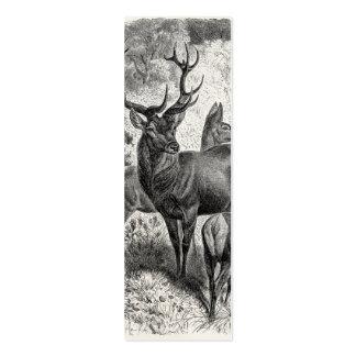 Vintage 1800s Red Deer Illustration Stag Doe Fawn Mini Business Card