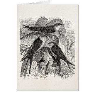 Vintage 1800s Red-Rumped Swallow Martin Bird Birds Cards