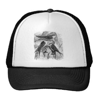 Vintage 1800s Red-Rumped Swallow Martin Bird Birds Trucker Hat