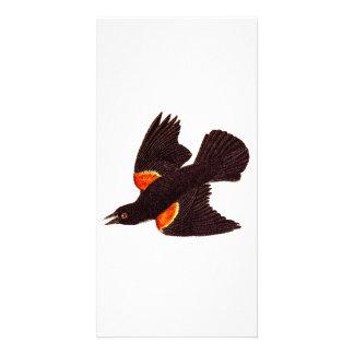 Vintage 1800s Red Winged Black Bird Illustration Card