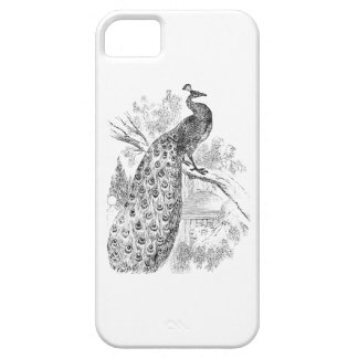 Vintage 1800s Retro Peacock Illustration Template iPhone SE/5/5s Case