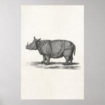 Vintage 1800s Rhinoceros Illustration - Rhino Poster