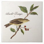 """Vintage 1800s Scarlet Tanager Bird Songbird Birds Ceramic Tile<br><div class=""""desc"""">Custom Template For Large Ceramic Tiles - Customized Tile Templates. Personalize with your own name, pattern, design, quote, monogram, or photograph. Use our cool templates, artwork, photos, graphics, and illustrations, then add names, text, quotes, and monograms to create your own ceramic tile. Click the &quot;Customize it!&quot; button to make it...</div>"""