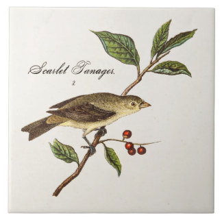 Vintage 1800s Scarlet Tanager Bird Songbird Birds Ceramic Tile