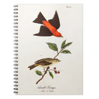Vintage 1800s Scarlet Tanager Bird Songbird Birds Notebook
