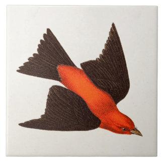 Vintage 1800s Scarlet Tanager Bird Songbird Birds Ceramic Tile