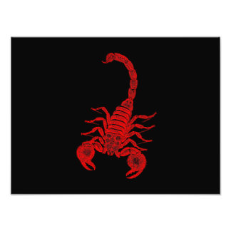 Vintage 1800s Scorpion Illustration Red Scorpions Art Photo