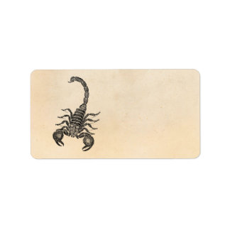 Vintage 1800s Scorpion Illustration - Scorpions Label