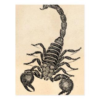 Vintage 1800s Scorpion Illustration - Scorpions Postcard