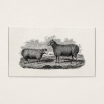 Vintage 1800s Sheep Ewe Illustration Retro Farm Business Card